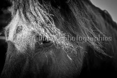 Horse Photo Fine Art Photography Animal by PatrickRabbatPhotos