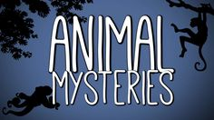 A to Zee of Animal Mysteries (Winner BBC Focus Award, Bristol Science Film Festival 2016) on Vimeo