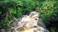 Karamea South Island New Zealand Nz South Island, New Zealand South Island, Nature Hd, Autumn Nature, Beautiful Islands, Beautiful Places, Beautiful Pictures, Amazing Places, Tai Chi