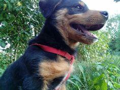 Archie #rottweiler #myprecious #myhappines💖🐶