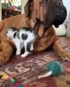 Cute Baby Cats, Cute Little Animals, Cute Cats And Kittens, Cute Funny Animals, Funny Dogs, Funny Farm, Kittens Cutest, Cute Animal Videos, Cute Animal Pictures