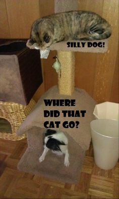 You can never outsmart the kitty!