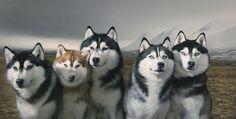 Wolves dan_alarcon_jr