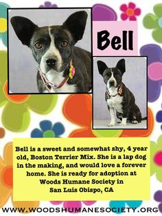 Bell is waiting to be adopted at Woods Humane Society in San Luis Obispo, CA