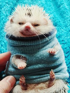 These 30 Animals In Sweaters Aren't Gonna Let Cold Weather Ruin Their Fun