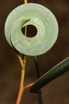 (20) Tumblr - Leaf lollipop by kasia-aus on flickr. Posted by Alice Ballard