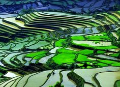 Rice Fields in Guilin, China