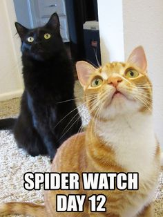 They're still there… http://coleandmarmalade.com