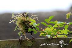 StampingMathilda: Capturing Spring