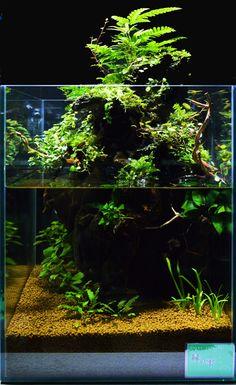 Biotope Aquarium, Aquarium Garden, Aquarium Terrarium, Nature Aquarium, Terrarium Plants, Planted Aquarium, Aquarium Fish, Vivarium, Aquascaping