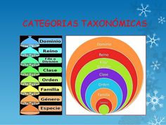 categorias taxonomicas - Buscar con Google