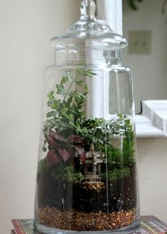DIY Network shares expert tips for building a terrarium and how to choose the best terrarium plants.