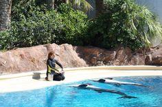 Dolphin habitat Mirage Las Vegas