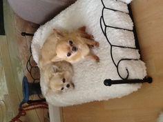 Tia and rosie