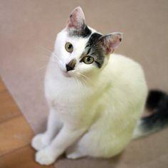 ひと安心 - http://iyaiyahajimeru.jp/cat/archives/62958