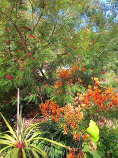 backyard designs – Gardening Ideas, Tips & Techniques Australian Garden Design, Australian Native Garden, Australian Plants, Bush Garden, Hillside Garden, Garden Bed, Back Garden Design, Yard Design, Garden Inspiration