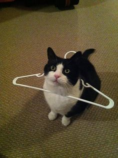 hahah this coat hanger cat looks a bit like Jan http://amzn.to/2k2HTMQ