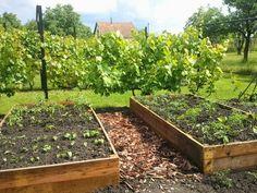 Magasan a legjobb! – A napfény illata Garden Boxes, Diy Bed, Raised Garden Beds, Plants, Gardening, Window Boxes, Lawn And Garden, Plant, Flower Beds