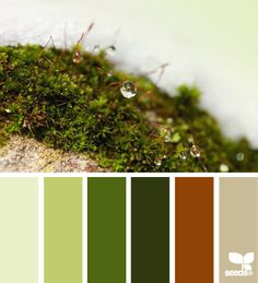 Moss Hues - http://design-seeds.com/index.php/home/entry/moss-hues