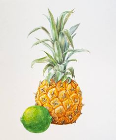 29 отметок «Нравится», 1 комментариев — Natalia  Strelkova (@natstrel) в Instagram: «#pineapple #lime #watercolor #art #drawing #painting #sketching #botanical #illustration #акварель…»