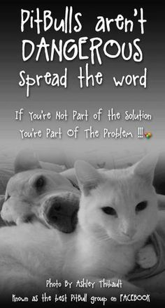 spread the word!  show your pit bull pride!        Pit Bulls aren't DANGEROUS.  If you're not part of the solution You're part of the problem!!