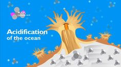 Make no bones about ocean acidification - Geography,Science (7,8,9,10)