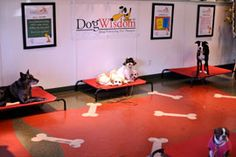 DogWisdom is also offered at a facility in St. Louis MO on Lindbergh Ave. Here he offers classes, board and train, drop off daily training and agility classes.