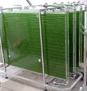 Research is examining microalgae, 20 to 80 percent oil by dry weight biomass, as a biofuel energy crop. Learn about algae production in...