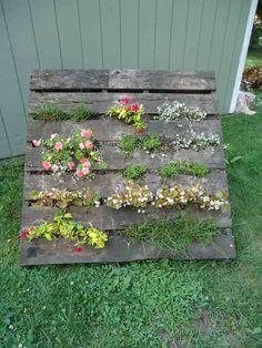 plant a pallet