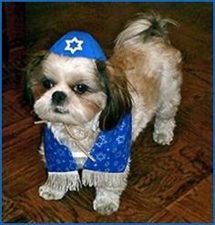 Jewish Dog