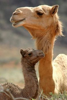 I just love Mother's LOVE!
