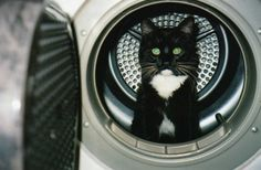 You want to help ME to do the wash. . . sorry the washing machine is busy.