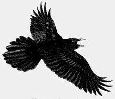 something to crow about the hindu crows pinterest crows