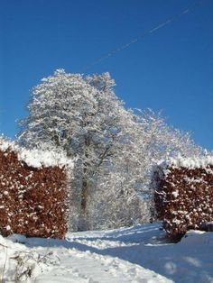 Snow in the Cotswolds - taken for it's triple contrast of colours shared as a writing prompt for the WoPo poem a day writing challenge. Taken by Sarah Snell-Pym Poem A Day, Writing Challenge, Prompt, Poems, Contrast, Snow, Colours, Inspired, Poetry