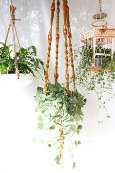 Plants are an easy way of decorating a home under a budget. Here are five creative and easy tips to follow if you want to decorate your home with plants.