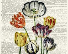 tulips vintage tulip artwork printed on page from old by FauxKiss, $10.00