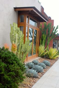 In Austin we could interpret this with Jerusalem thorn trees for height, 'Color Guard' yuccas for yellow and green spikes, Agave parryi truncata (low, blue agaves), and rosemary or copper canyon daisy for the rounded green shrub in the foreground.