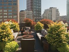 Rooftop Garden: The Terraces Conservatories and Balconies of New ...
