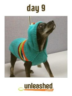 "Ponyo works the runway in this colorful hooded sweater by Chili Dog.  Repin today's ""Fashion Unleashed"" featured image (2/16/2013) to one of your boards for a chance to win a 100 dollar Unleashed by Petco gift card.   The winner will be announced tomorrow (2/17/2013) between 12 pm and 5 pm PST. Chili Dogs, 100 Dollar, Pets 3, Cool Pets, Hooded Sweater, Pet Stuff, Puppy Love, Bunnies, Dogs And Puppies"