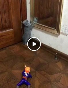 Animated GIF - I'm afraid of you and will not play with you Funny Cats And Dogs, Cute Cats And Kittens, Kittens Cutest, Cute Kitten Gif, Cat Gif, Animals And Pets, Funny Animals, Cats Vs Cucumbers, Cat Fails