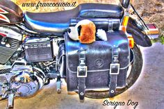 015417a244 19 Scrigno Dog Purse For Harley Sportster Sportster Saddlebags, Motorcycle  Saddlebags, Sportster Motorcycle,