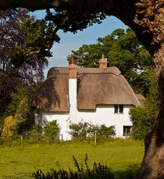 A pretty thatched cottage framed by an old Oak tree at Highwood in Hampshire_ England