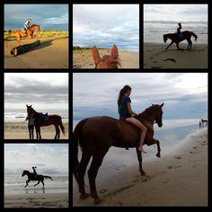 Unvergessliche Momente für Raphaela Wenko und ihren Ronjo Rubin Rouge. © Privat #Glücksmomente #adventkalender #pferdeliebe #EQWOnet Horses, Animals, Red, Women Riders, Horseback Riding, Animais, Animales, Animaux, Animal