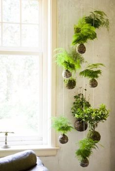 Hanging gardens in your living room. Great idea of bringing the outdoors in - intelligent apartment living!
