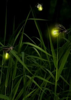Image result for fireflies at night