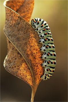 Bright Caterpillar #insects #animals