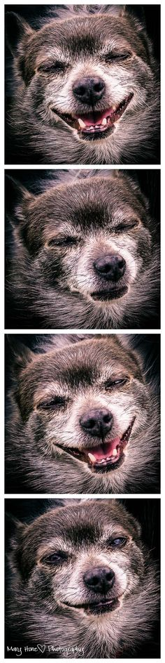Photo Booth Roxy #dogs #photography