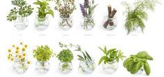 cultivar ervas aromáticas