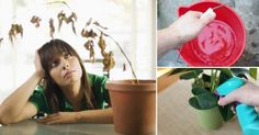 Cómo+recuperar+una+planta+seca