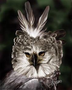 Harpy Eagle by ellastasia on DeviantArt Kinds Of Birds, All Birds, Birds Of Prey, Exotic Birds, Colorful Birds, Aigle Harpie, Beautiful Birds, Animals Beautiful, Philippine Eagle